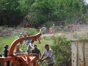 Chipping the mangrove
