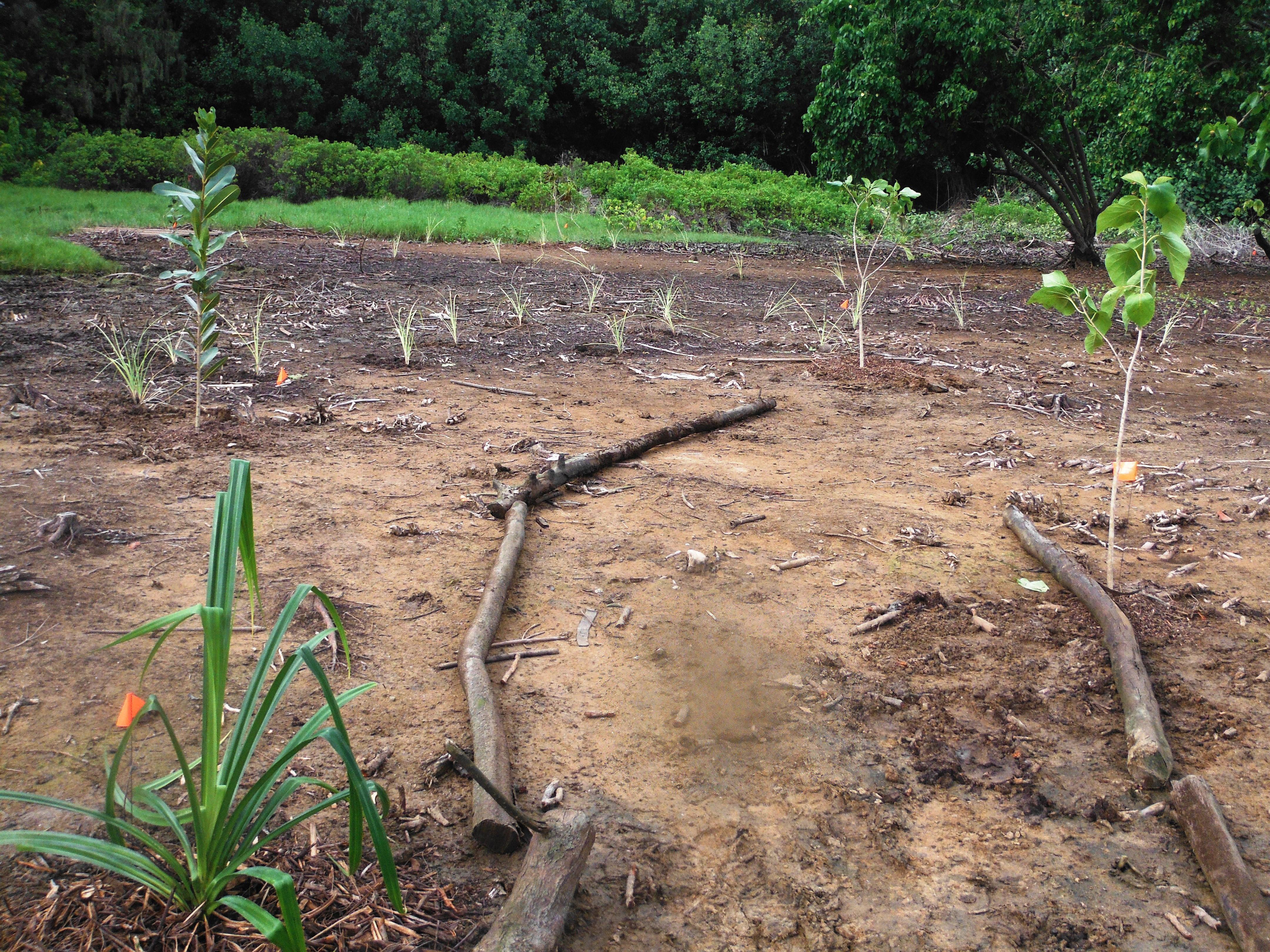 Replanting – Malama Huleia