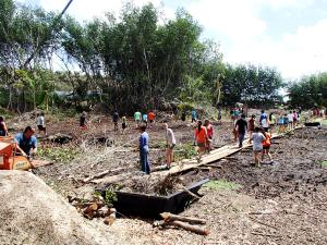 Kauai High School sudents removing mangrove debris