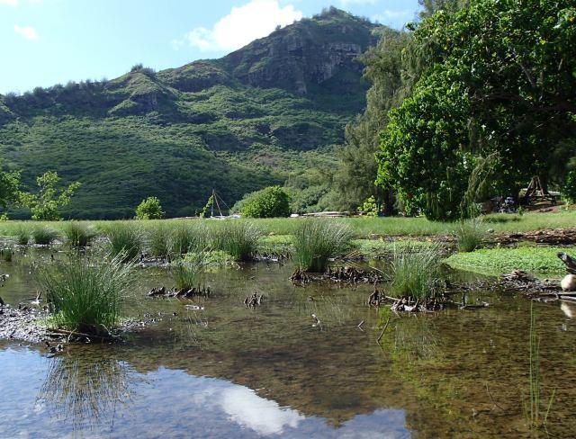 Puali Wetland today 10-14-15